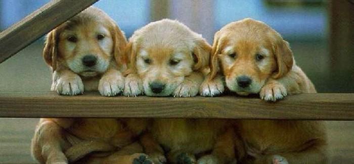 Frank Lloyd: arquiteto bom pra cachorro!!