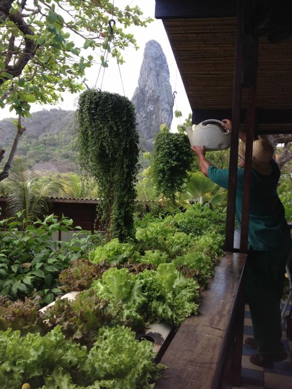 O Restaurante, de decoração igualmente rústica possui uma pequena horta onde você irá escolher a verdura e os legumes que você deseja consumir.