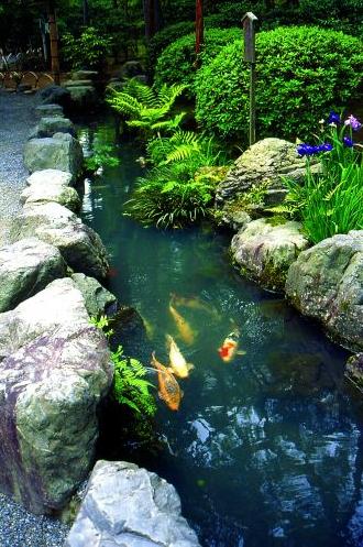 Elementos importantes do jardim: agua e carpas