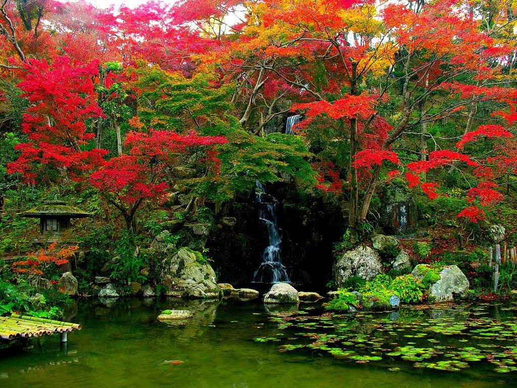 Acer Vermelho e vegetacao tipica