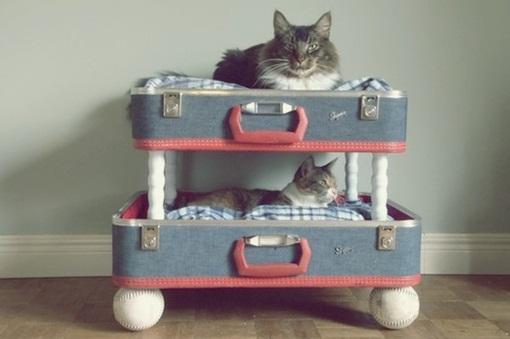 O teu gato vai agradecer uma cama dessas!